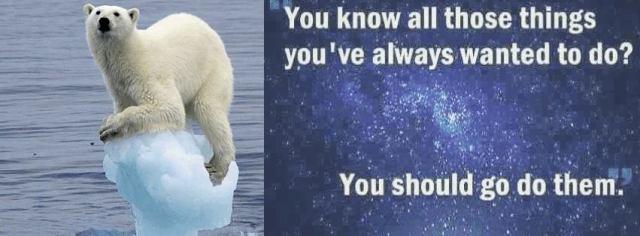 image polar bears