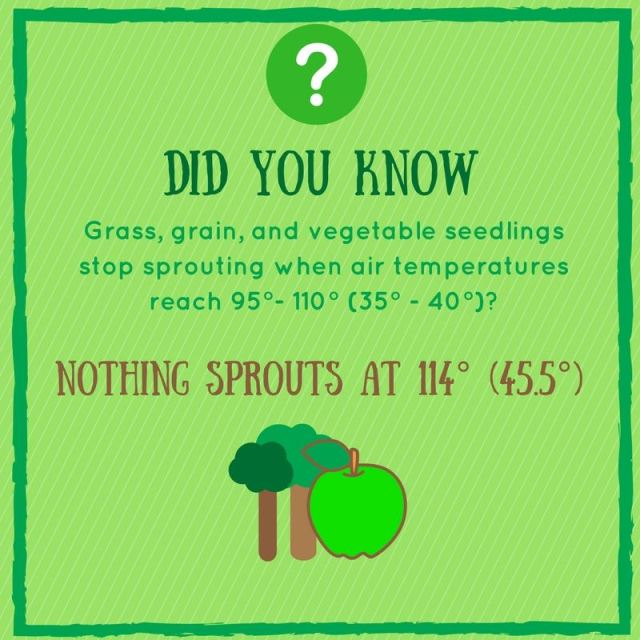 nothing sprouts